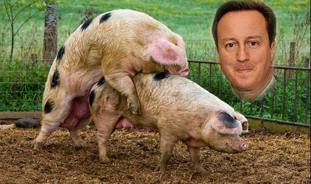 david cameron pig sex